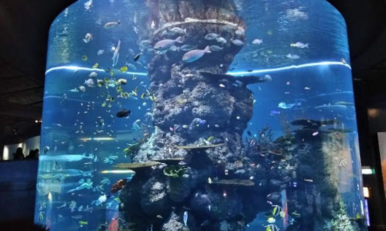 Akuarium Raksasa Marine Park