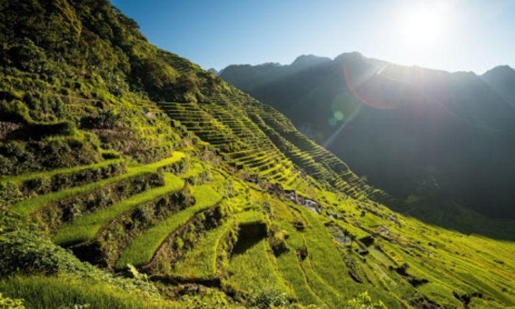 Sawah Banaue atau Banaue Rice Terraces