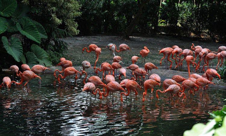 Taman Jurong Penuh Burung